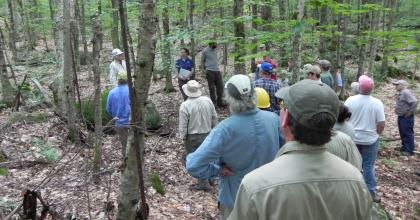 a group of foresters in the woods