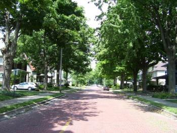 street lined with maple trees
