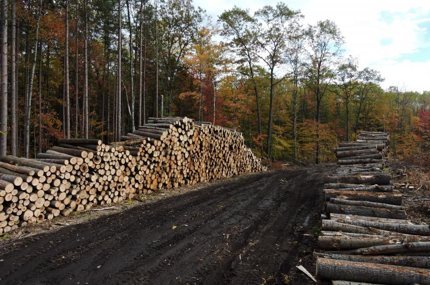 A log deck in the Resistance unit in October 2019 (Credit: Brooke Propson)