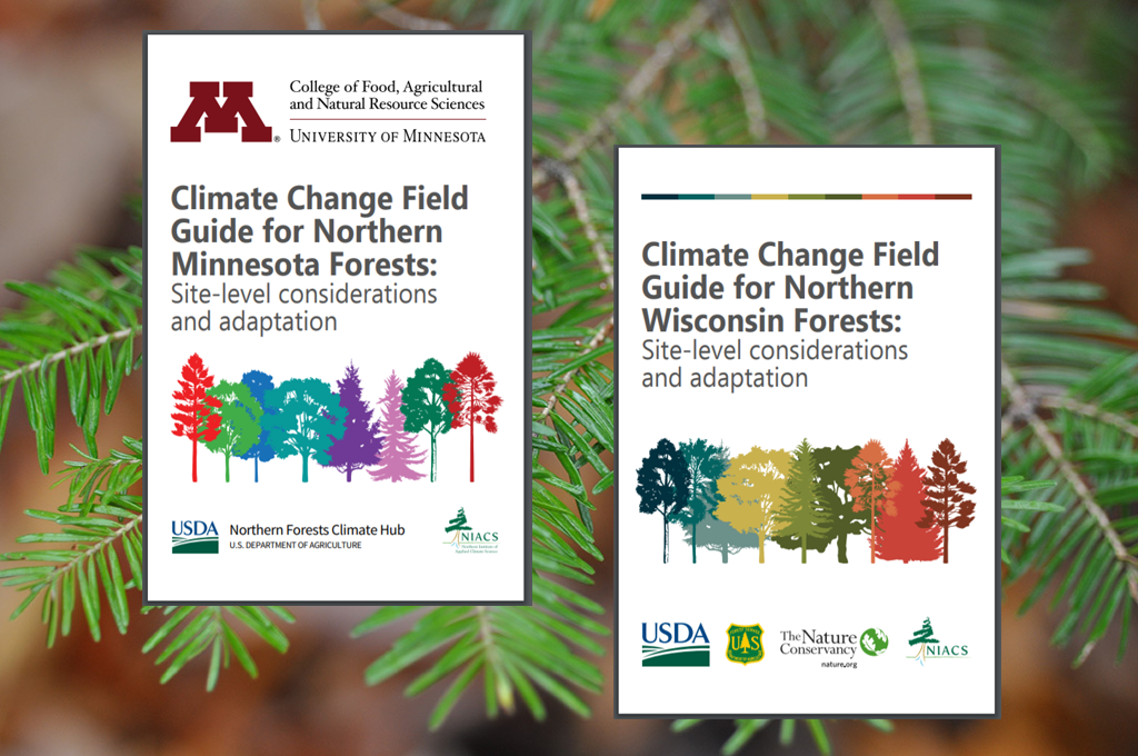 Covers of the field guides that are currently available for the Northwoods