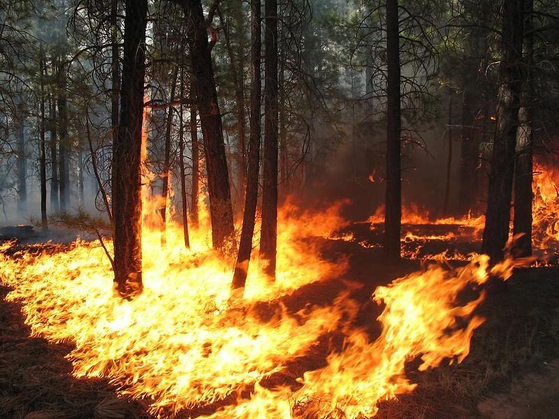 Kaibab National Forest Ponderosa Pine prescribed burn