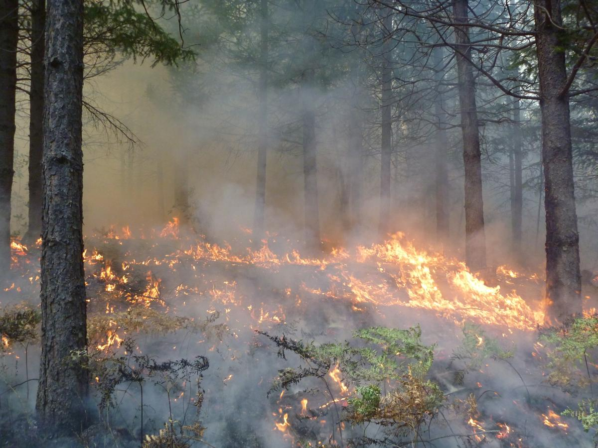 Shasta-Trinity National Forest prescribed burn 2018 (USDA Forest Service)